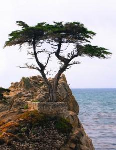 cypress rock